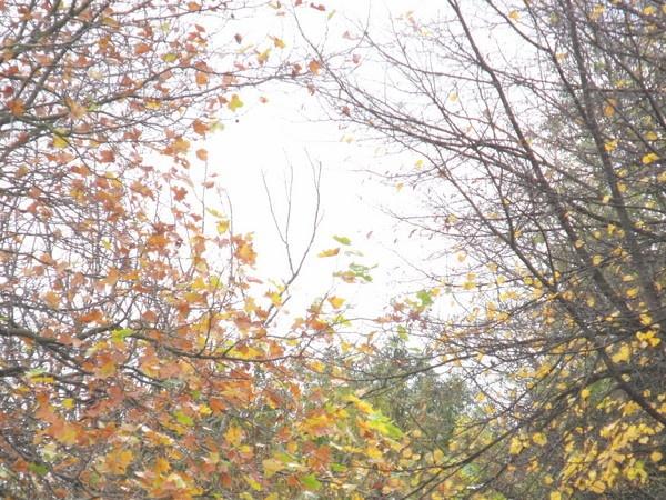 Autumn by kforeman