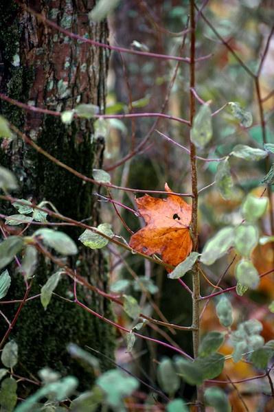 Lone Autumn Leaf by Carrera_c