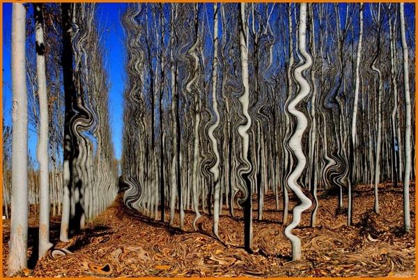spookie trees by SpanishDave