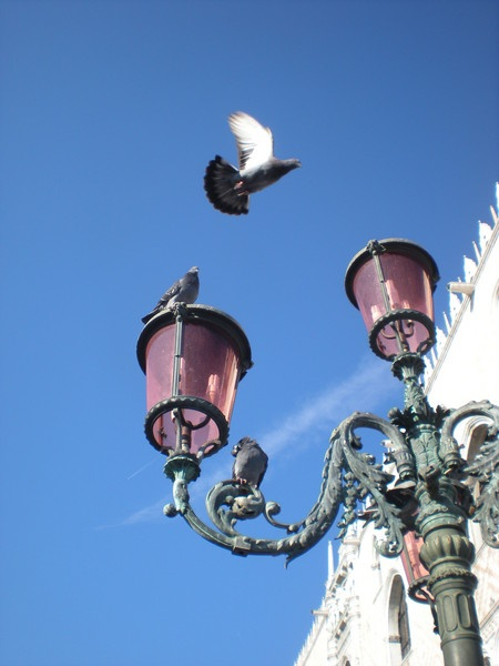 doves have a rest in Venice by Virna