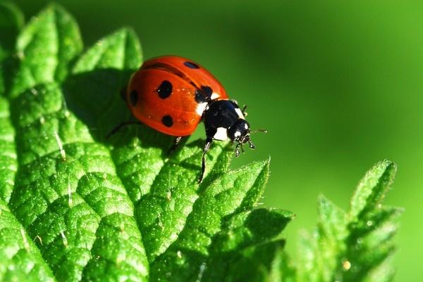 Ladybird Adventure by sallybea