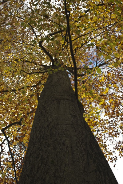 Up The Trunk by mark_wood