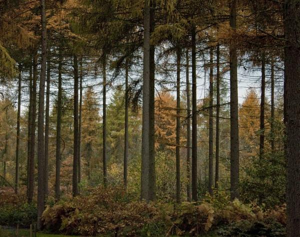 Autumn Scene by mark_wood