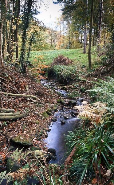 Autumn stream by landscapepics