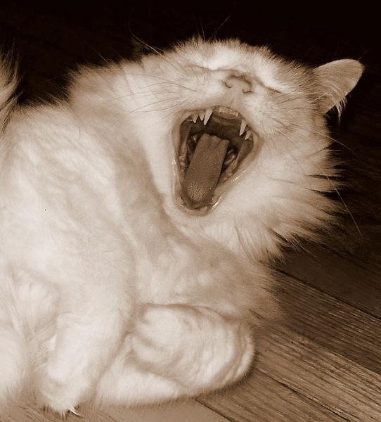 Yawnning by Jovana63