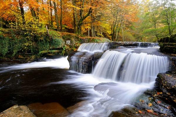 Autumn Fall by gibbsy