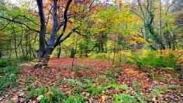 Autumn (806)