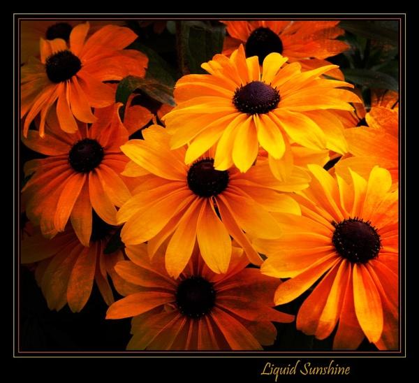 Liquid Sunshine by gregl