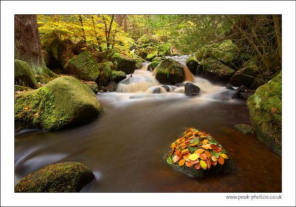 Winding Wyming Brook by richardwheel