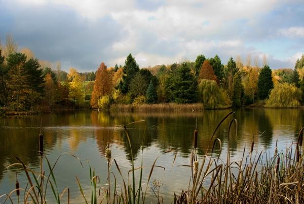 autumn flourish by Steelpins