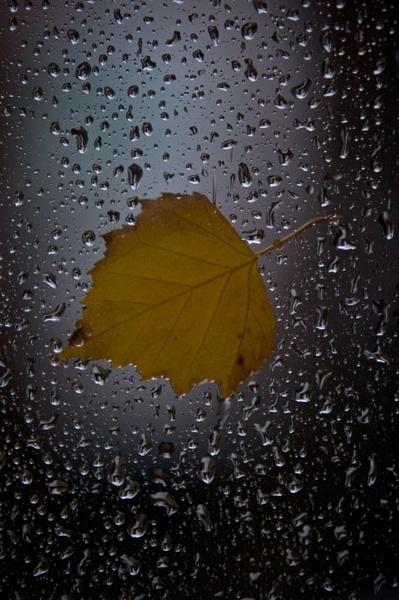 Autumn by markthecat