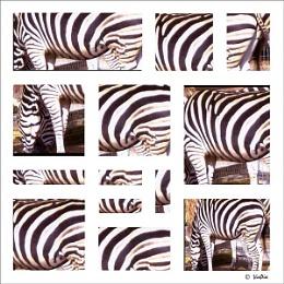 Zebra Montage
