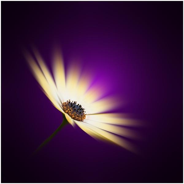 Deep Purple by bfgstew