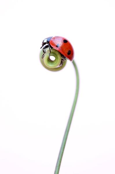 Ladybird by brianhaslam