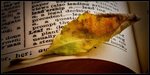 Leaf n. [leaves pl.] by big_baboon