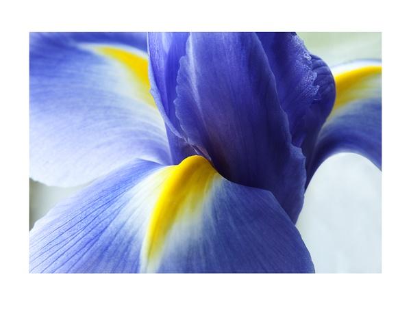purple by brianquinn