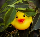 23 - A duck on a tree by Strobe