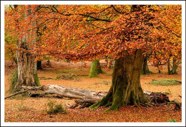 New Forest #1 by AlanTW