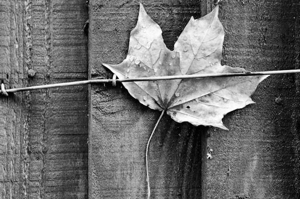 Trapped leaf by AdamW