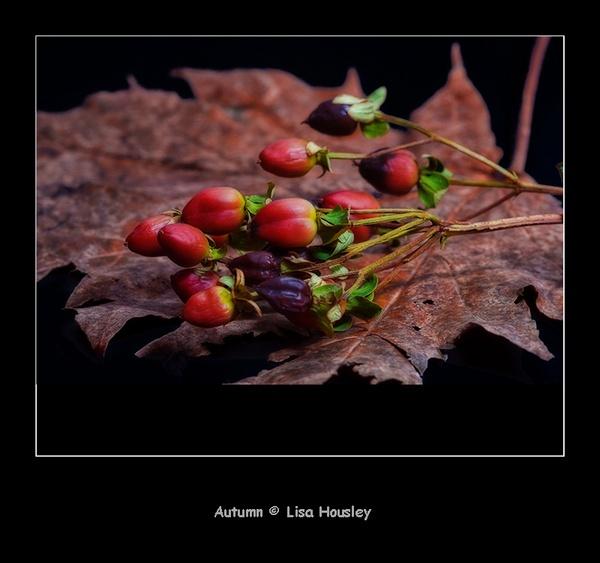 Autumn by taupo