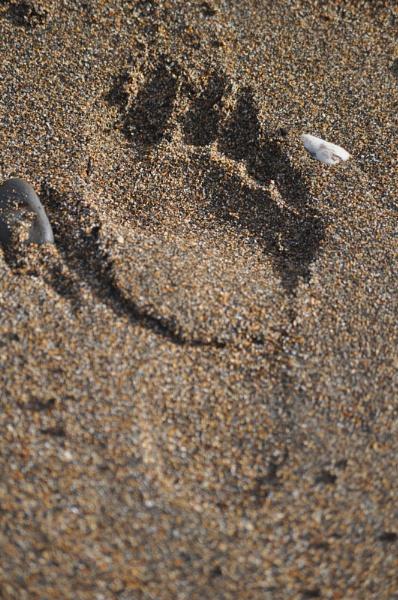 unusual footprint by Lynx08