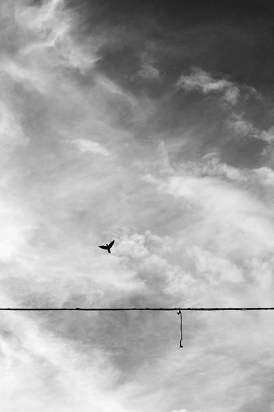 Free Again by FrancescoErcolano