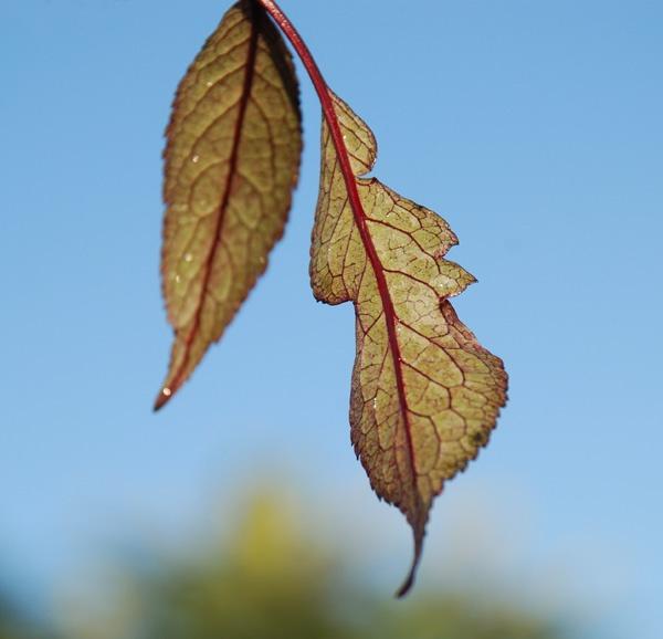 Morning Leaves by violet_girl
