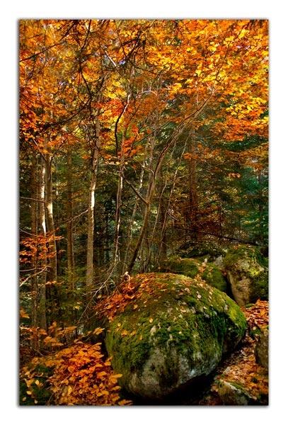 Autumn Fire by Dimitre_P