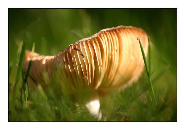 Fungi in the Morning sun