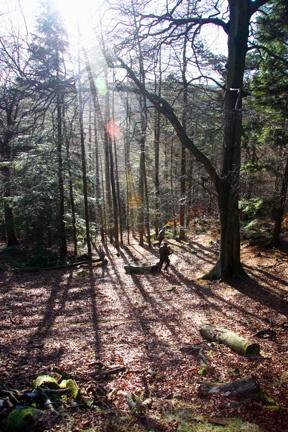shoot into the sun by adobedon