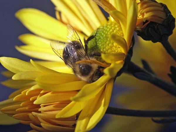 Novembre Nectar by fotoboy