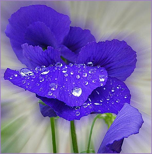 Raindrops by csopi