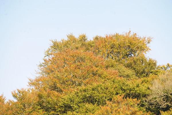 trees by trevmsklly