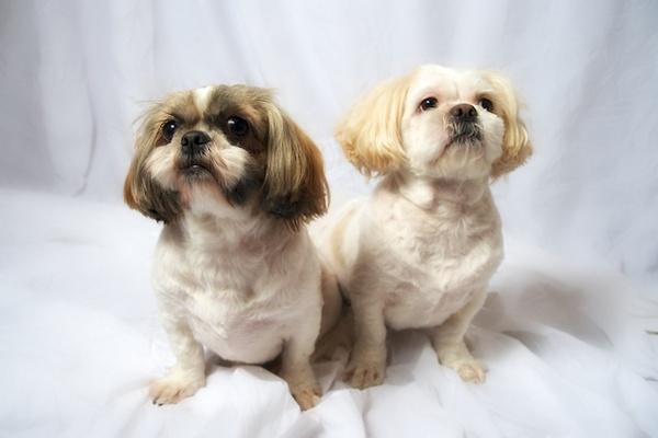 Jessy and Georgie by Carrera_c