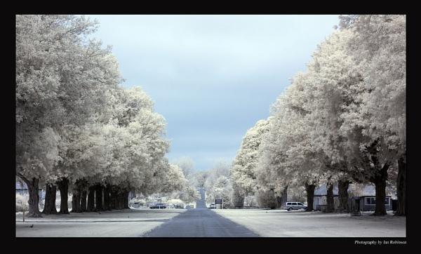 Infrared Avenue by ianrobinson