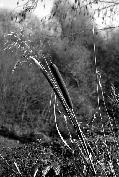 Black & White by Pentaxpaul
