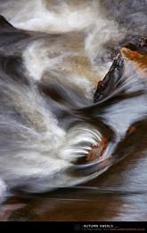 Autumn Swirls ...