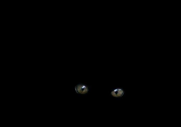 Black cat in the dark by jadro311