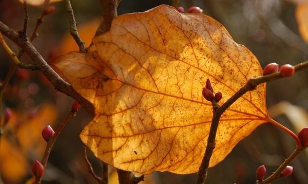Autumn Leaf by af1960