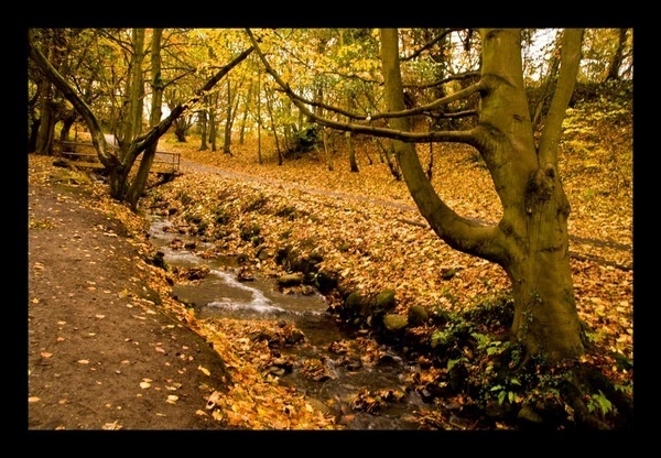 Today\'s Autumn  Scenes by Lou_Pink