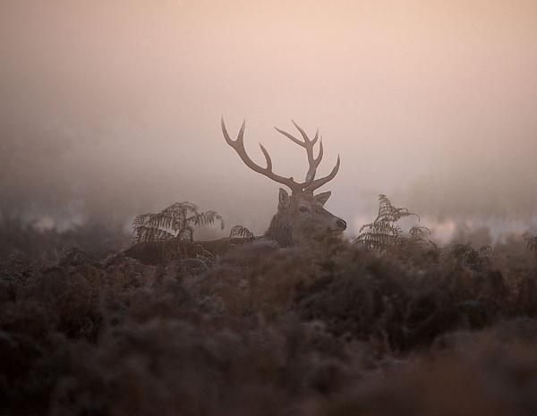 Early Morning Light by jennialexander
