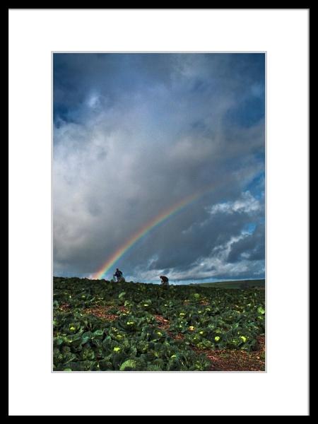 Irish Cabbage Pickers by DiegoDesigns