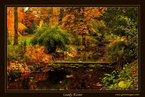Leafy River by GlynnisFrith