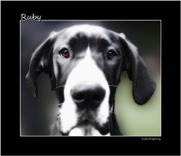 Ruby by Ridgeway