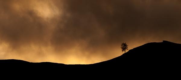 Kaybee\'s Tree by Goggz
