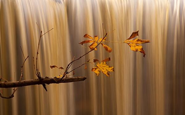 Leaf by ChrisStyles