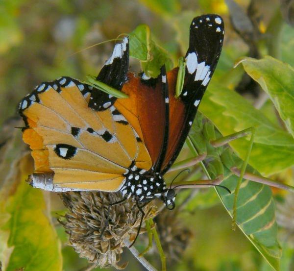 Nature love 29 by kishanm14