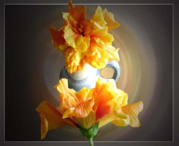 Hibiscus by csopi