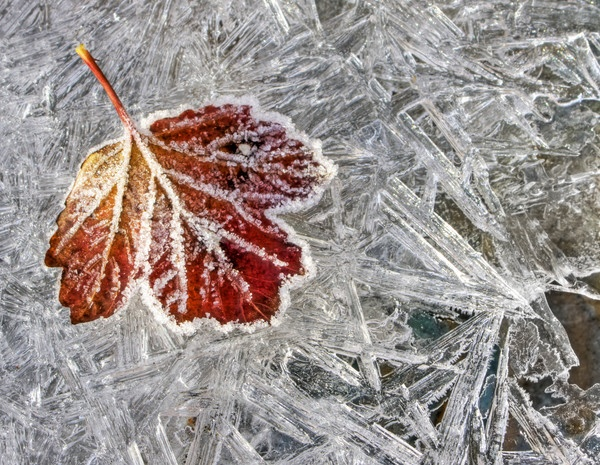 Leaf and Ice by Steve012345