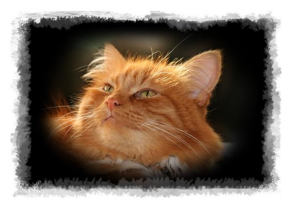 Billy The Cat by cyman1964uk
